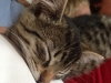 Katten Lucius, verdens mest kosete katt